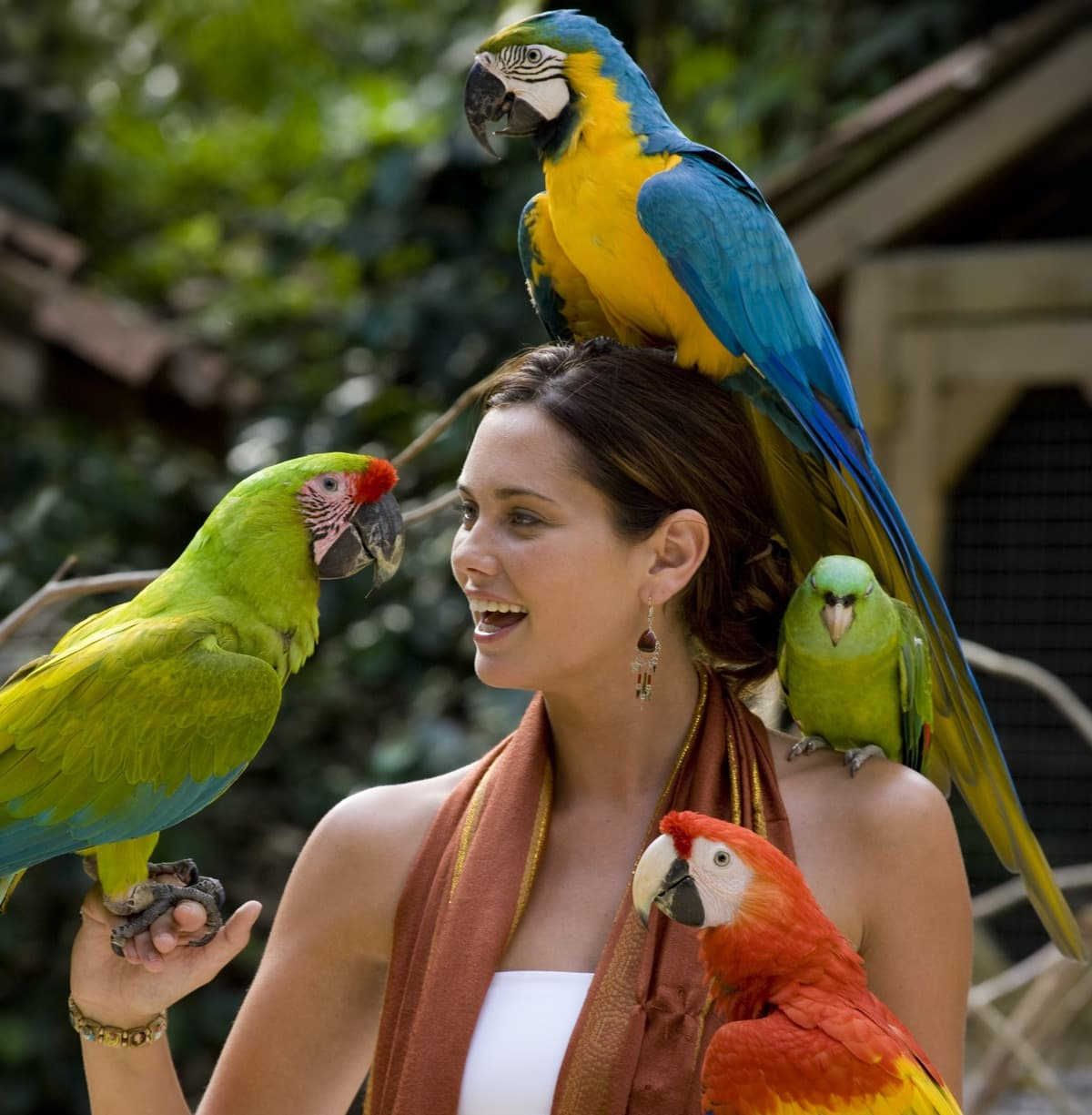 Day 6: Enjoy the beautiful Macaw Mountain Park